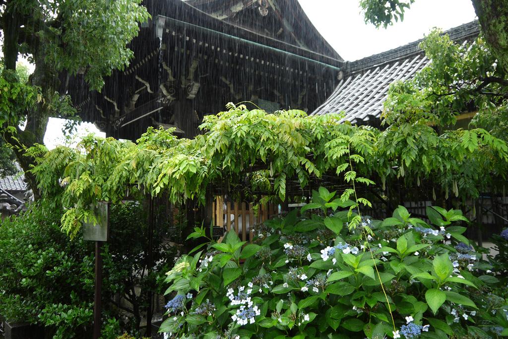 六孫王神社の雨の写真素材
