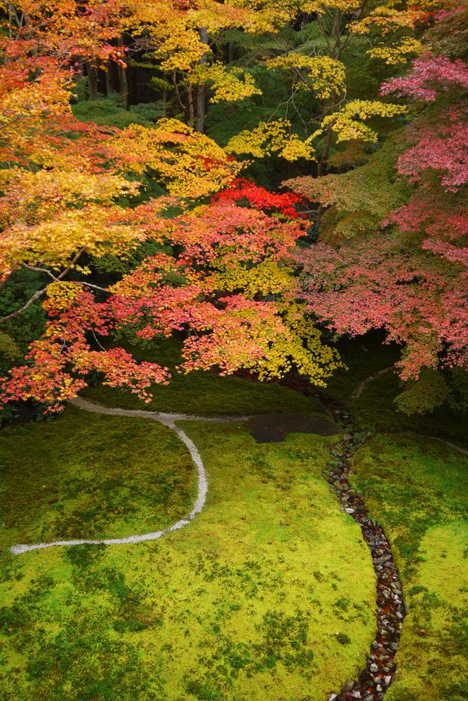 瑠璃光院の紅葉の写真素材