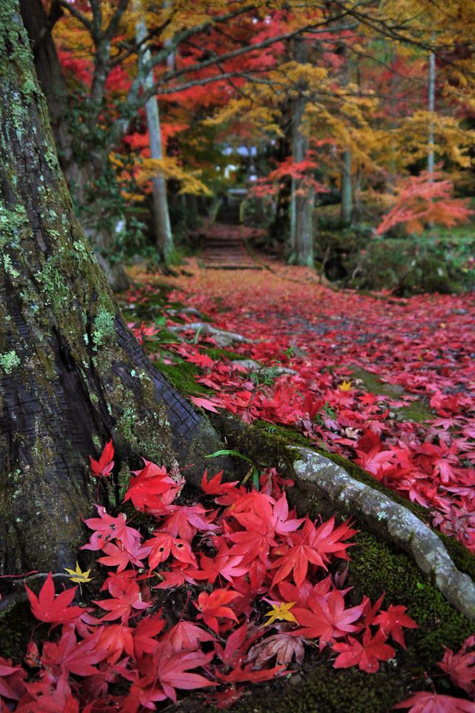龍穏寺の紅葉