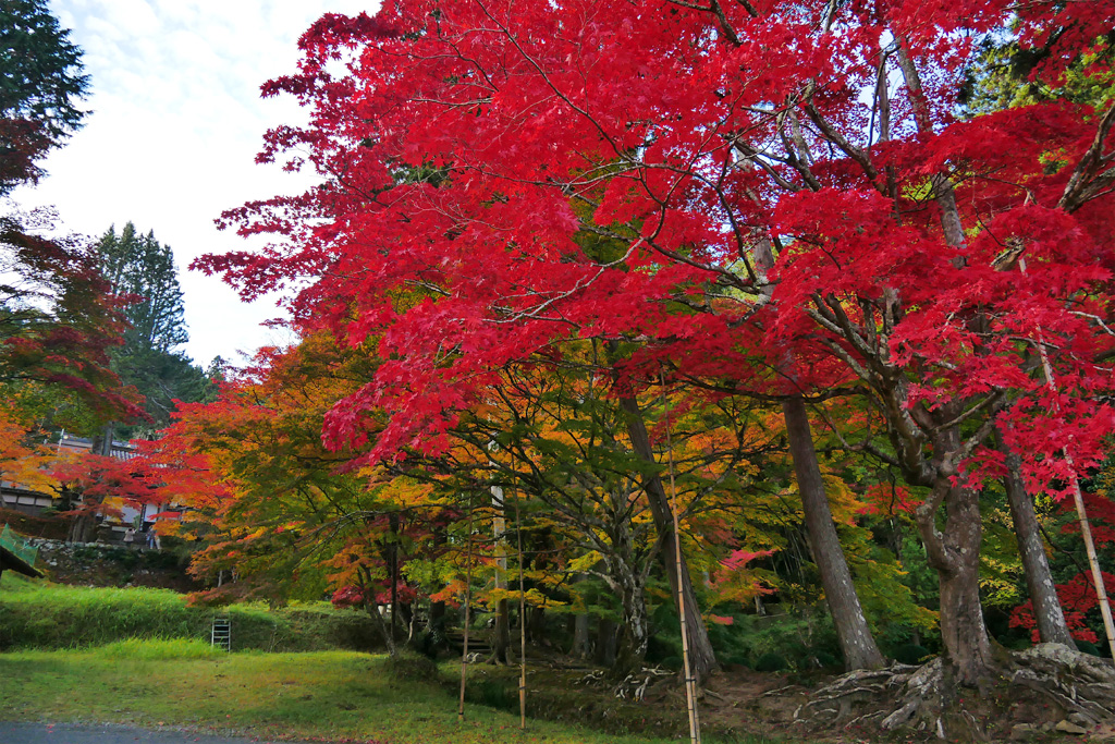 龍穏寺の紅葉の写真素材