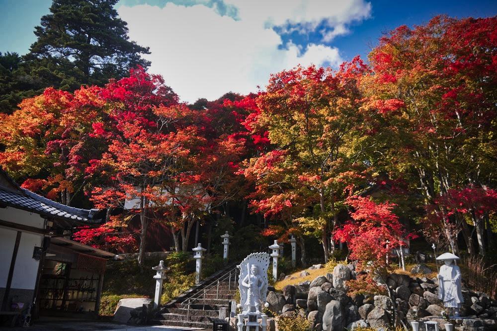 西光寺の紅葉の写真素材