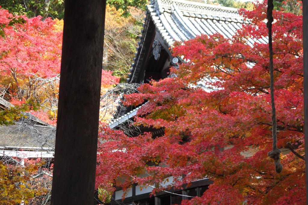 西明寺の紅葉写真
