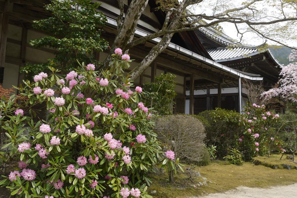 西明寺の紅葉の写真
