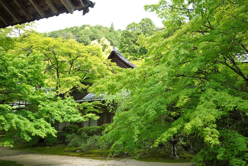 西明寺の青もみじの写真