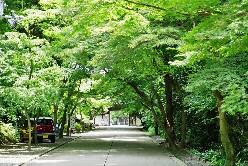 東福寺 最勝金剛院の写真素材
