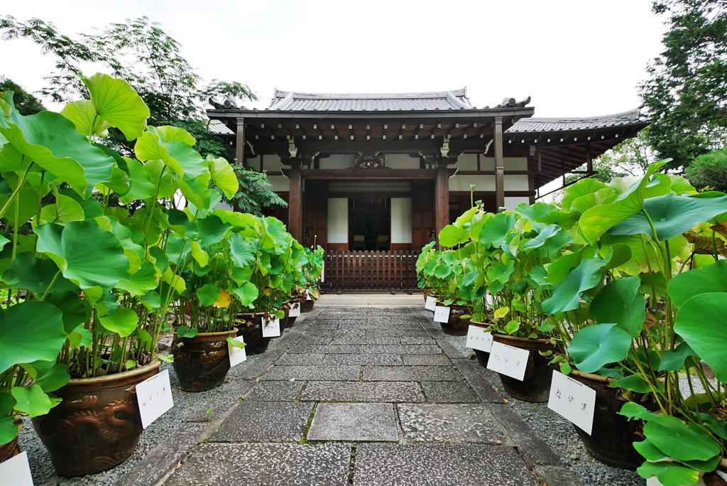 西雲院(金戒光明寺)の写真素材