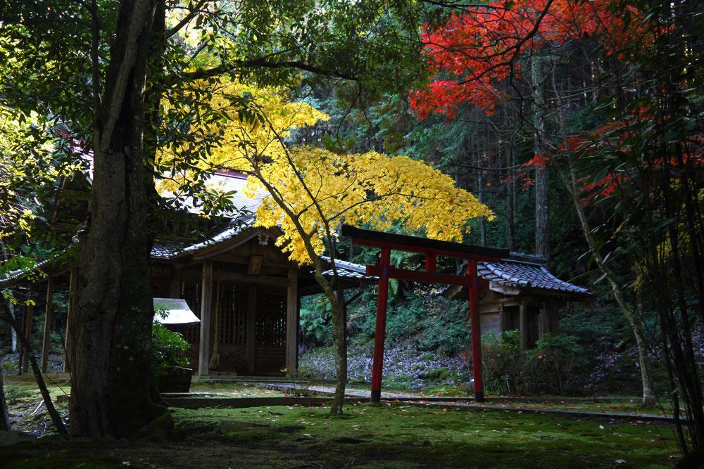 桜天満宮・積善寺の紅葉写真