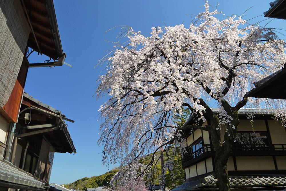 三年坂(産寧坂)の桜の写真素材