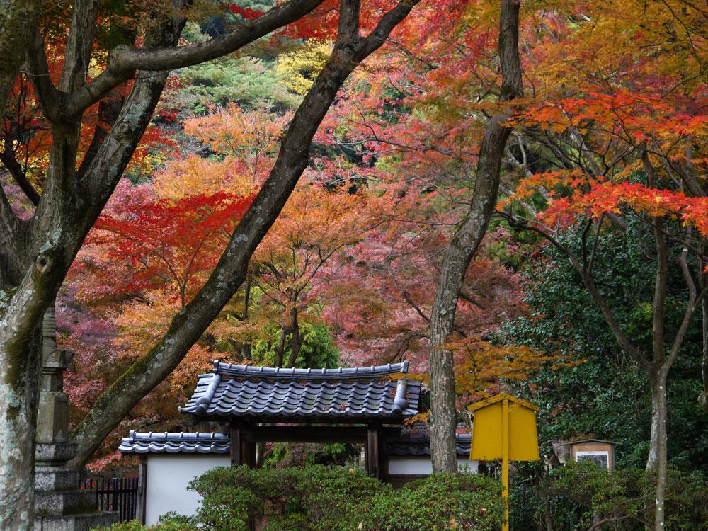 清閑寺の紅葉の写真素材