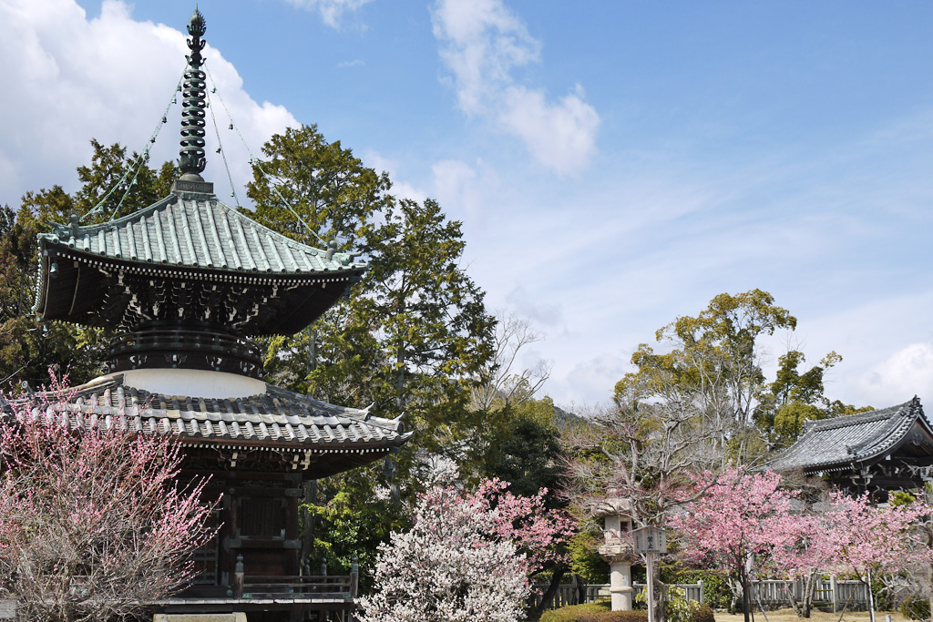 清凉寺の桜の写真素材