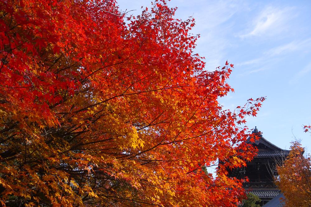 清涼寺の紅葉の写真素材