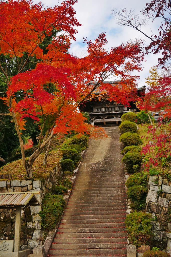 千手寺の紅葉 写真素材
