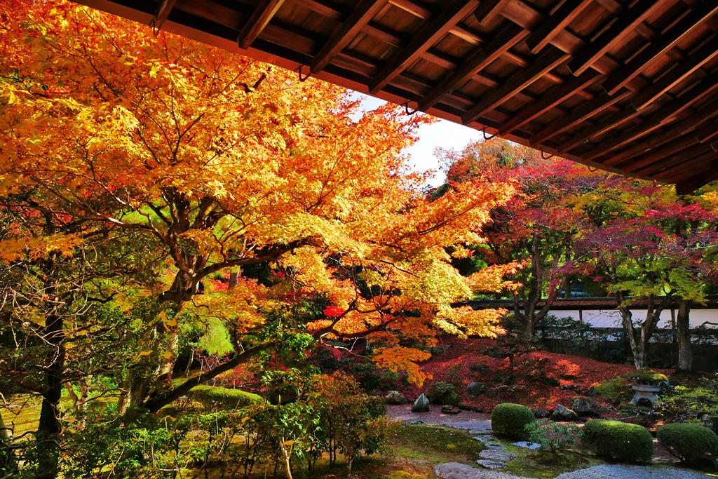 泉涌寺の紅葉の写真素材