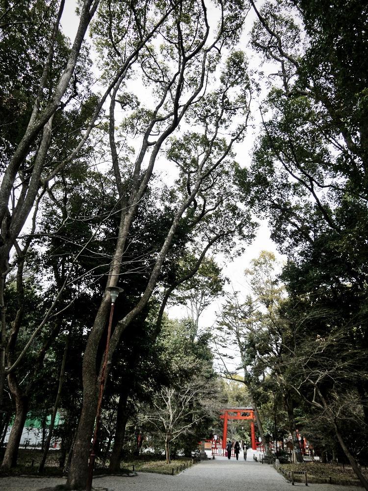 下鴨神社糺の森の写真素材