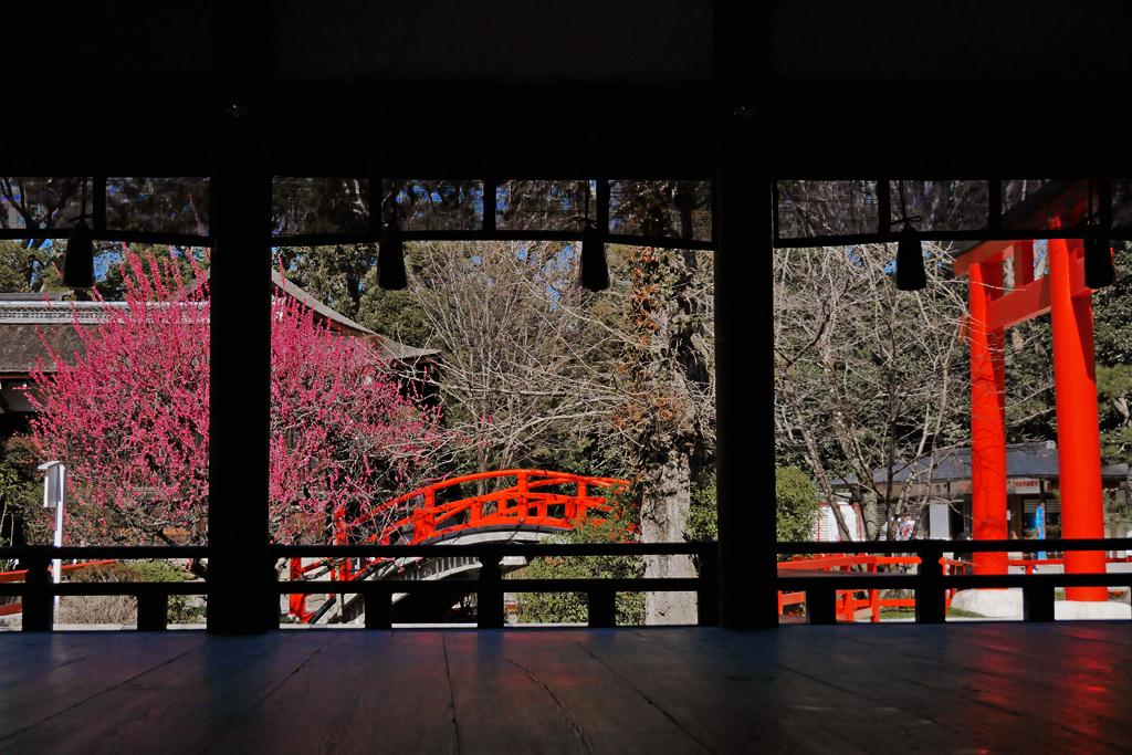 下鴨神社の梅の写真素材
