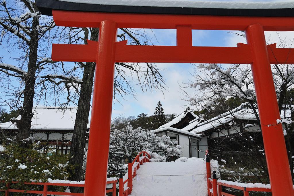 下鴨神社の雪景色の写真素材