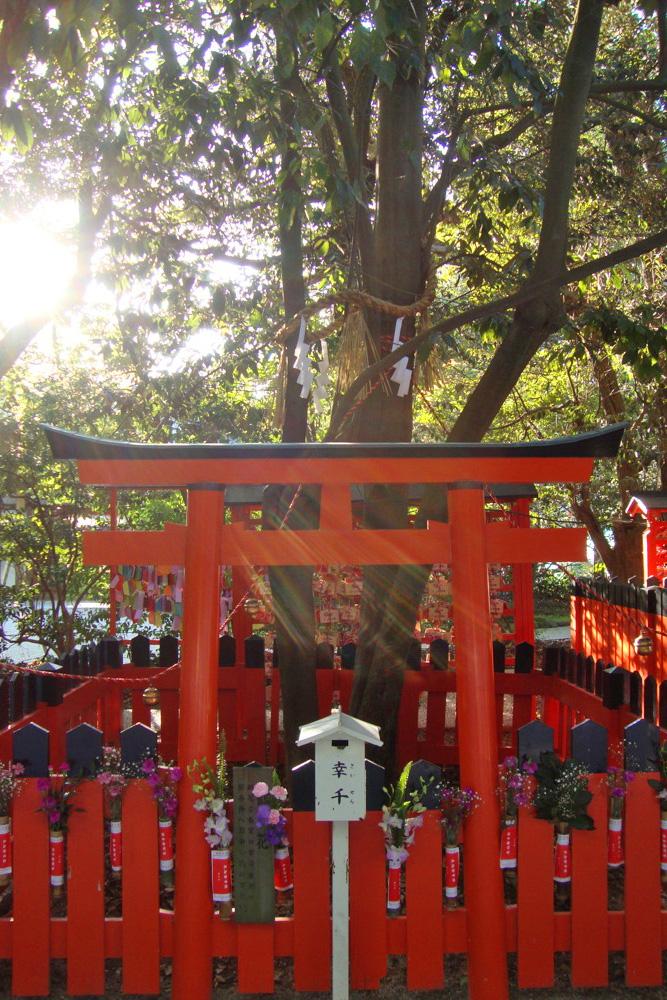 下鴨神社の写真素材