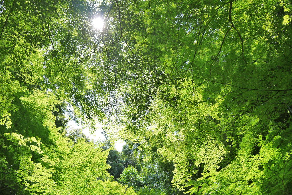 新緑のイメージ写真素材