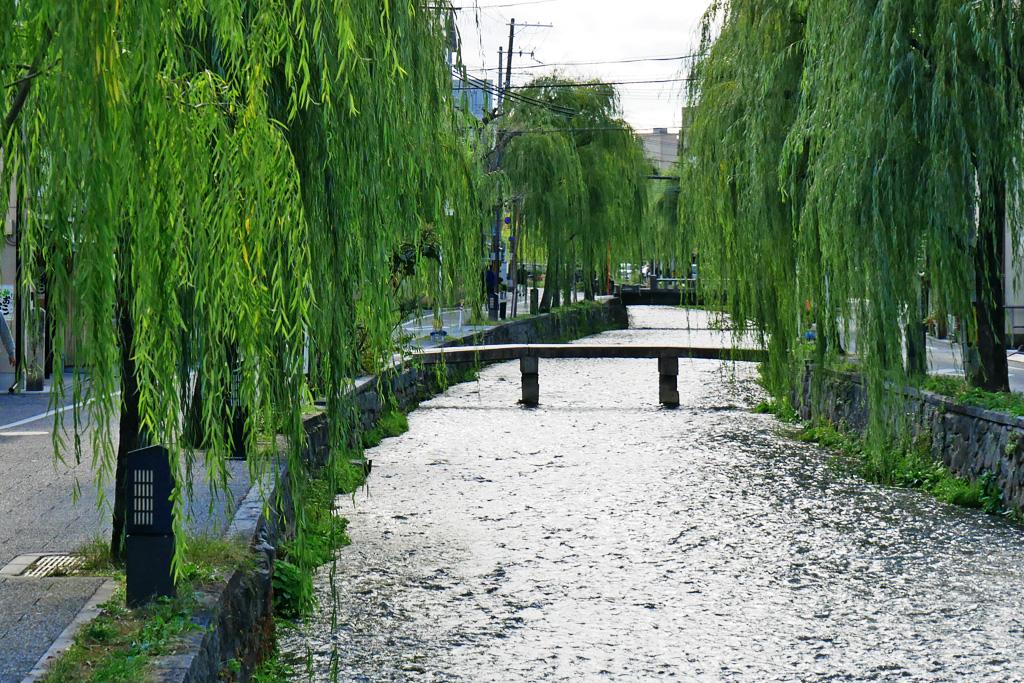 白川一本橋の写真素材