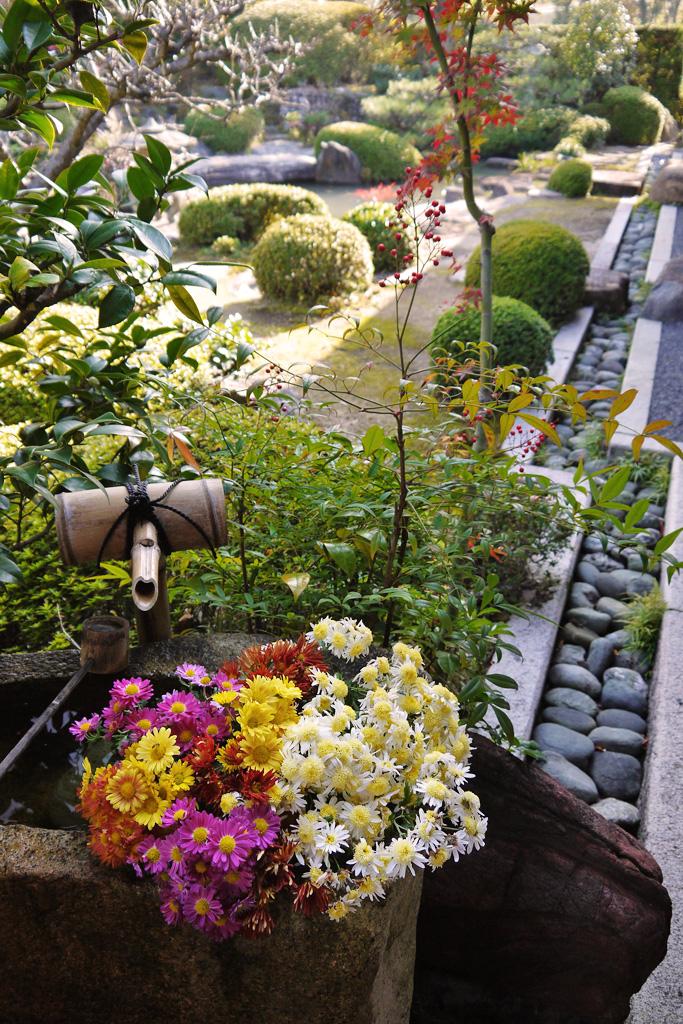 正法寺の花手水の写真素材