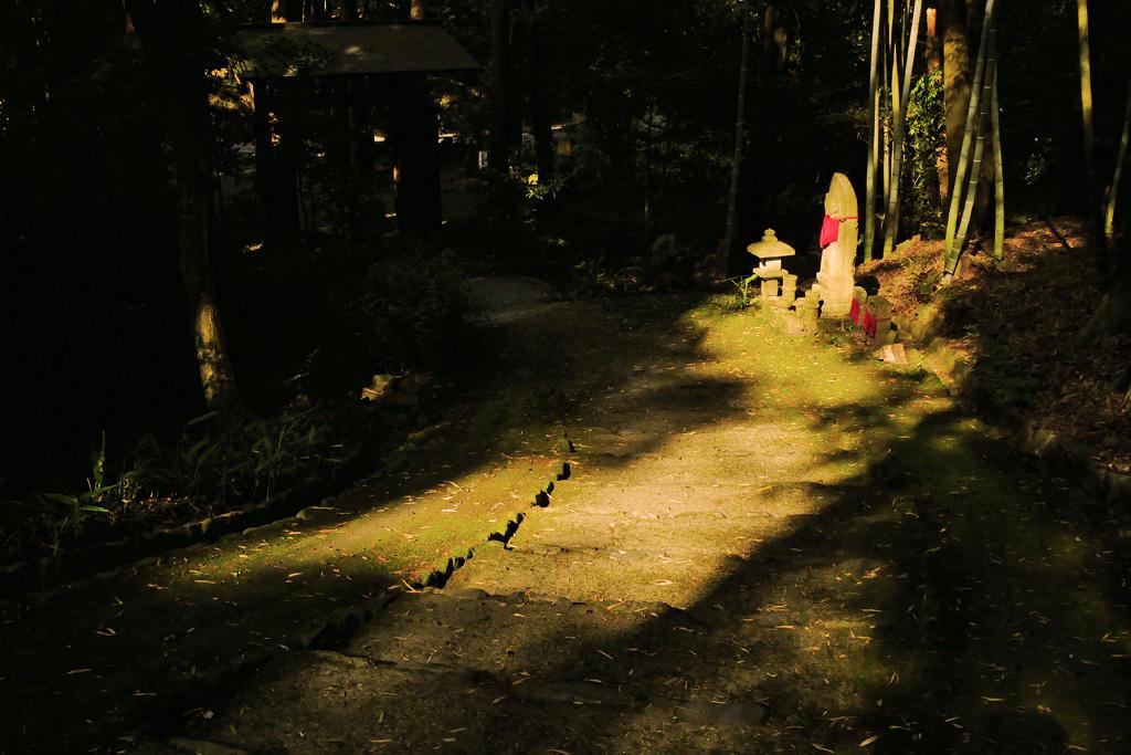 正伝寺の写真素材
