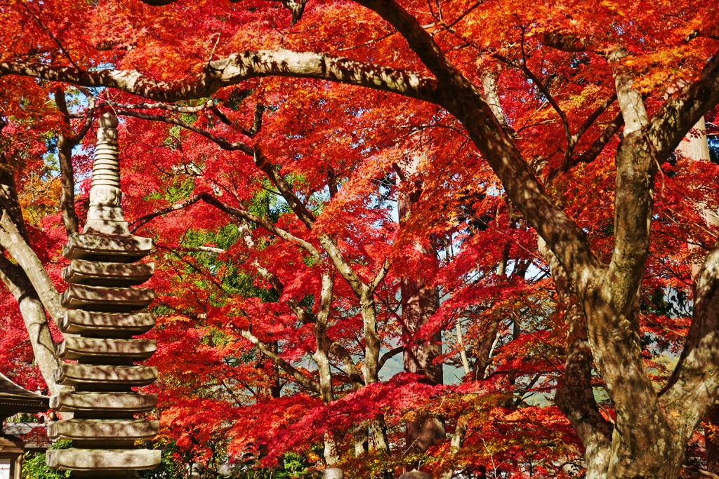 和束町 正法寺の紅葉写真素材