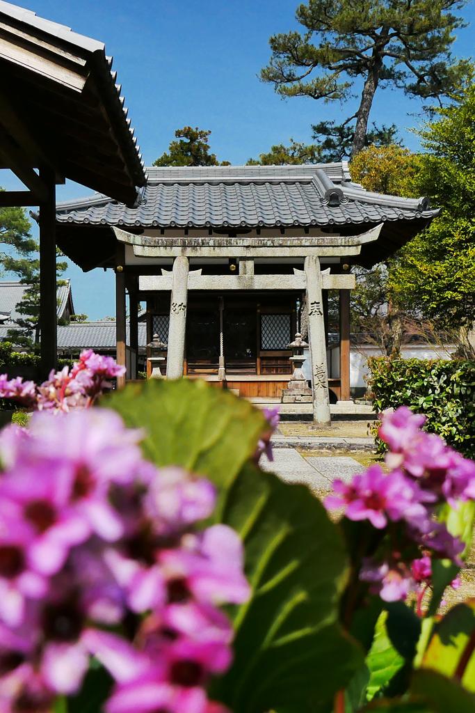 相国寺の弁天社の写真素材
