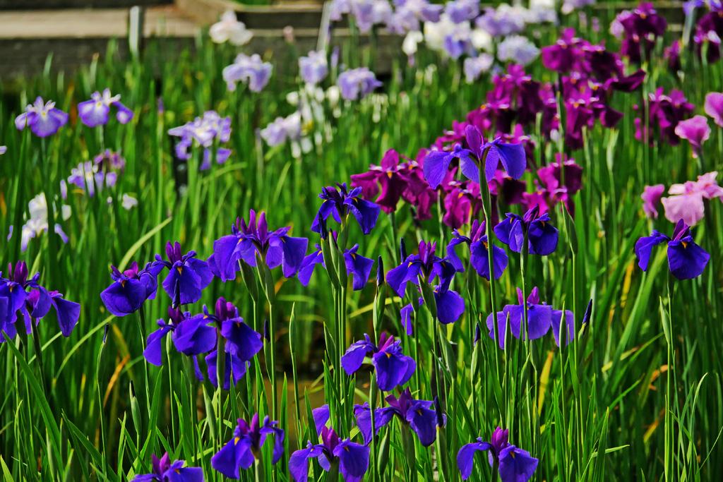 京都府立植物園の写真素材