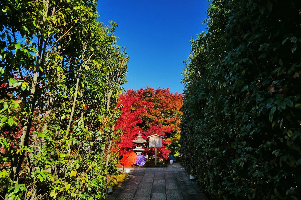 勝林寺(東福寺)の紅葉 写真素材