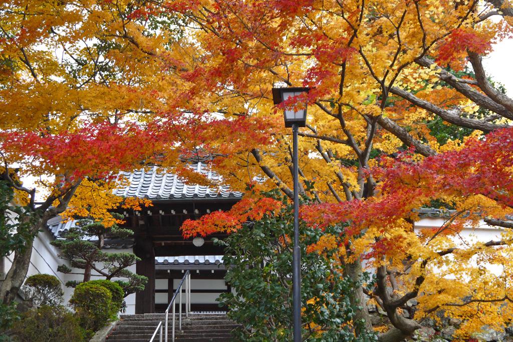 招善寺の紅葉の写真素材