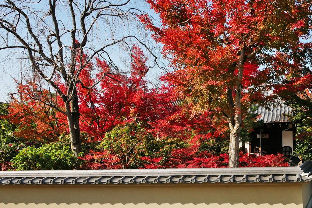 高台寺 春光院の写真素材