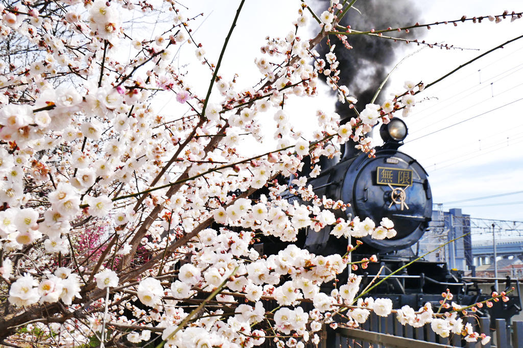 京都の蒸気機関車8620形8630号機の写真素材
