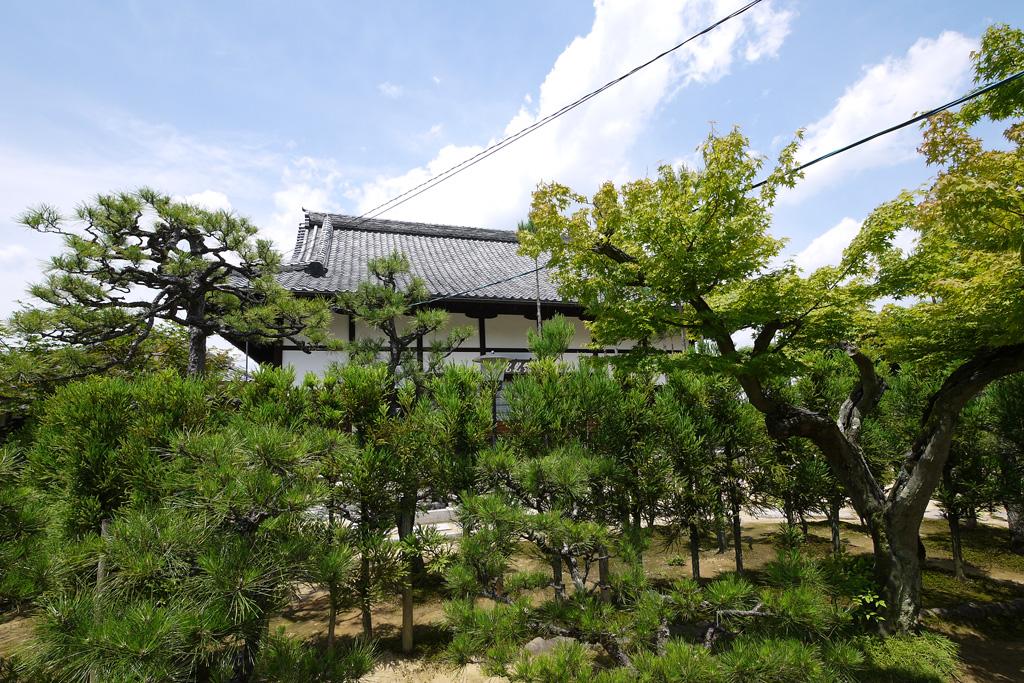 大徳寺 総見院の写真素材