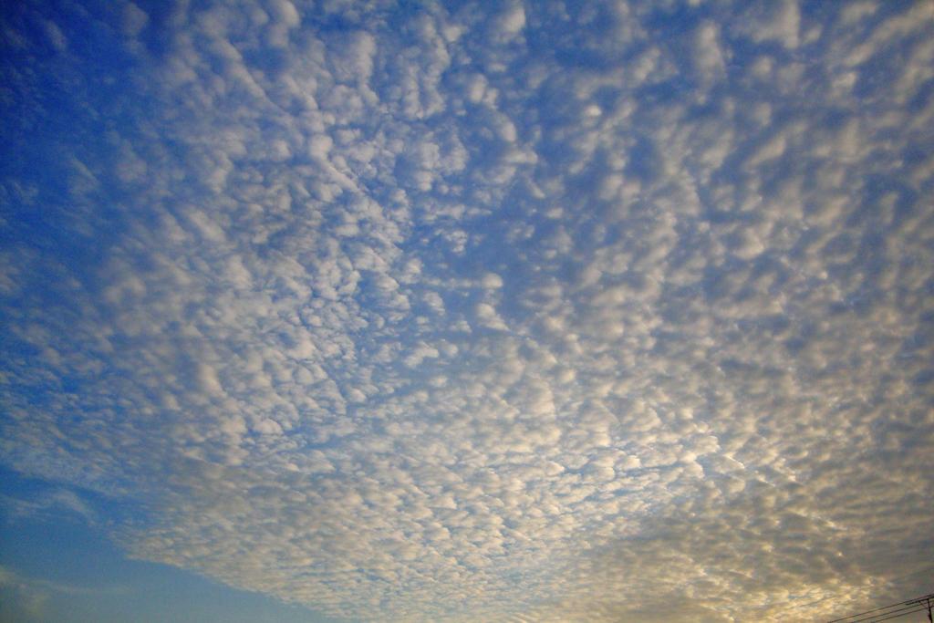 うろこ雲の空の写真素材