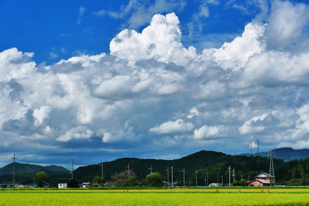 雲と青空と田んぼの写真素材