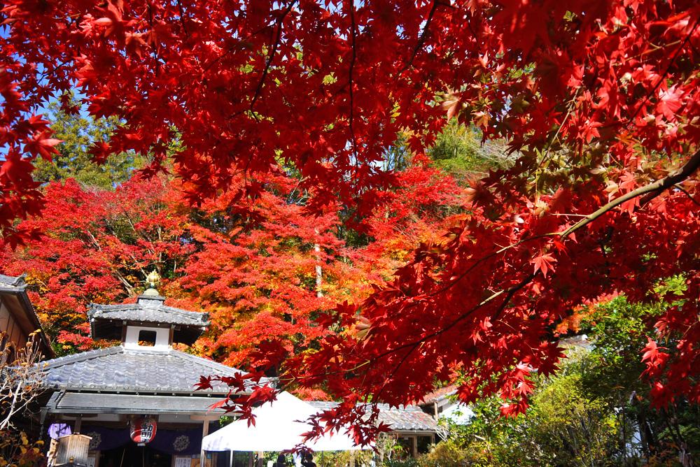 山科聖天の紅葉の写真素材
