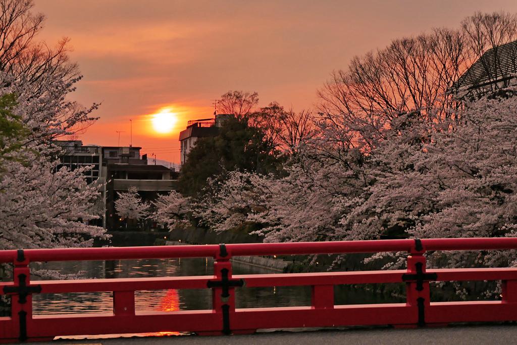 疏水 夕日と桜の写真素材