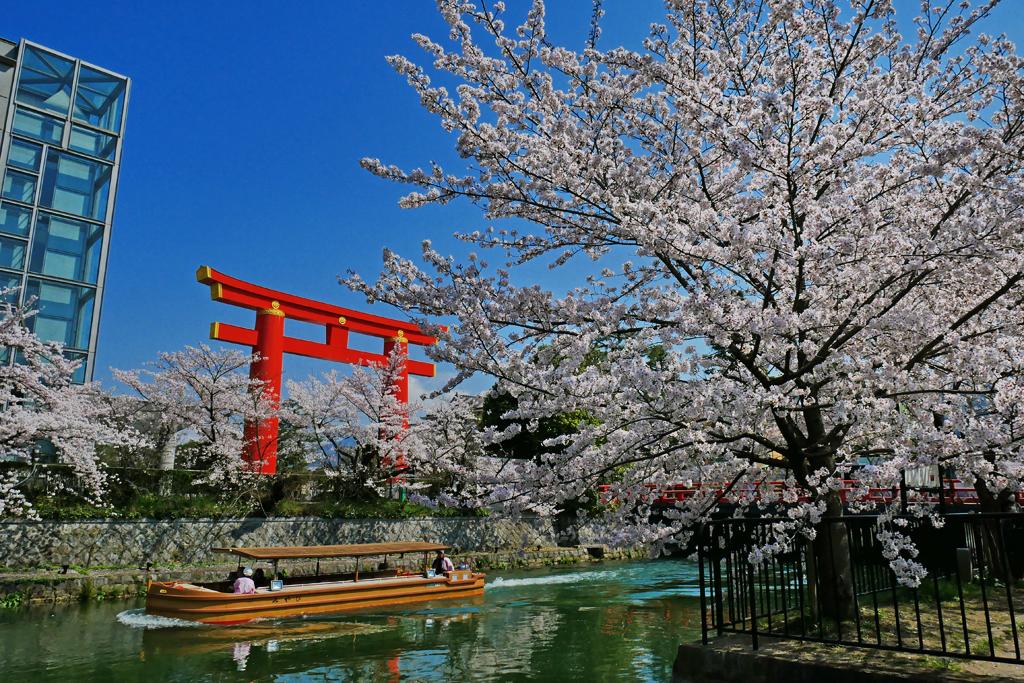 疏水 桜と船の写真素材