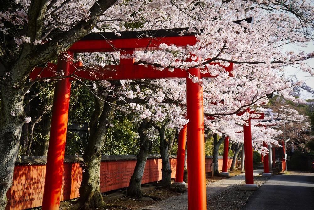 竹中稲荷神社の写真素材