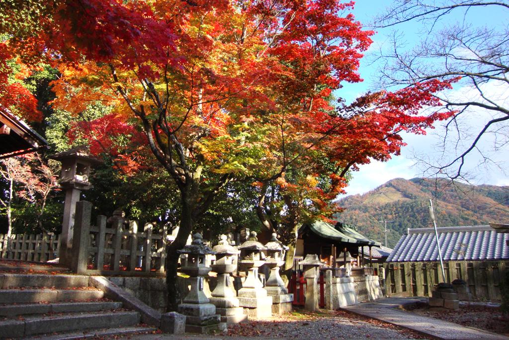 竹中稲荷神社の紅葉の写真素材
