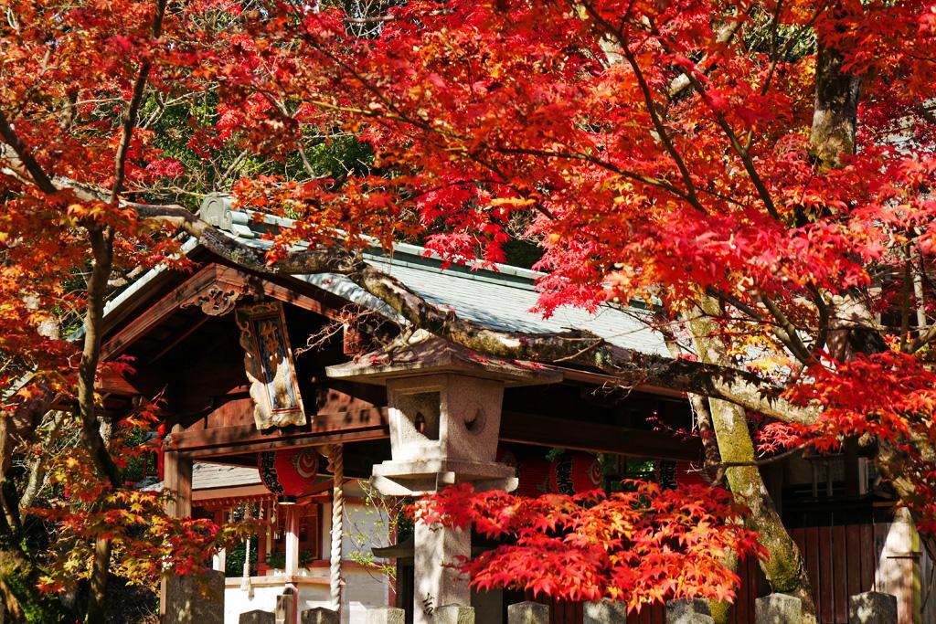 竹中稲荷神社の紅葉写真素材