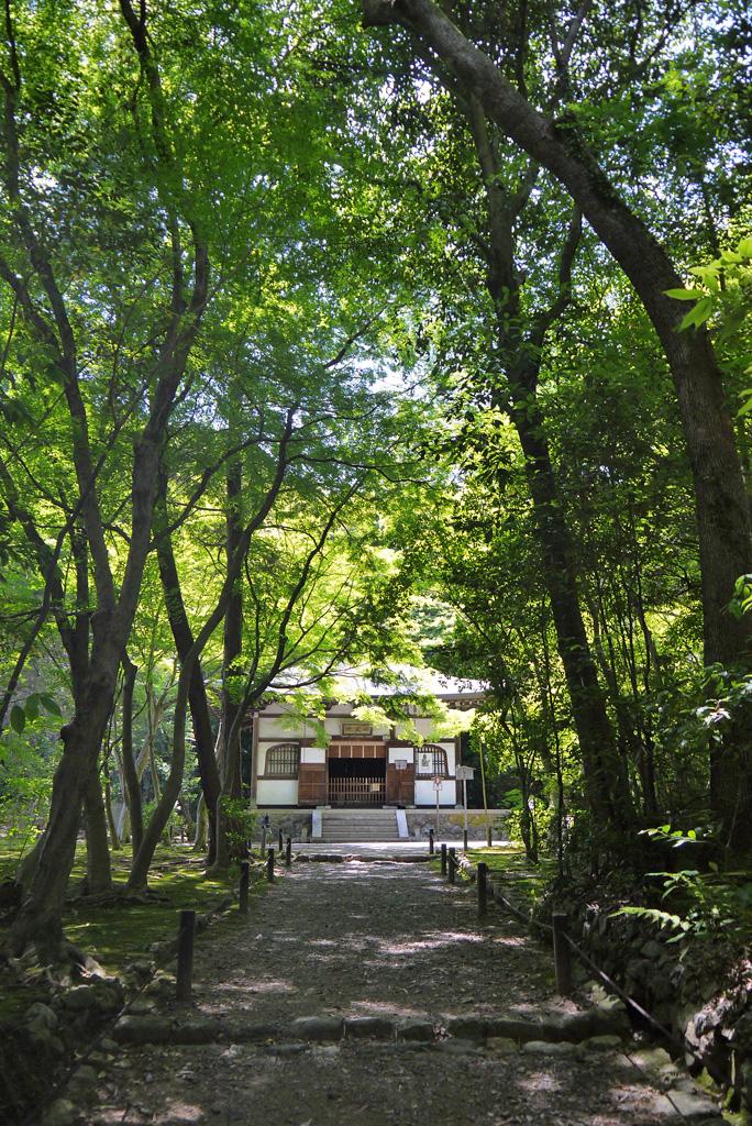 地蔵院(竹の寺)の青もみじ
