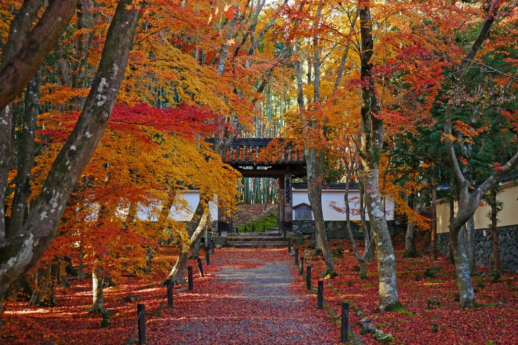 地蔵院竹の寺の紅葉