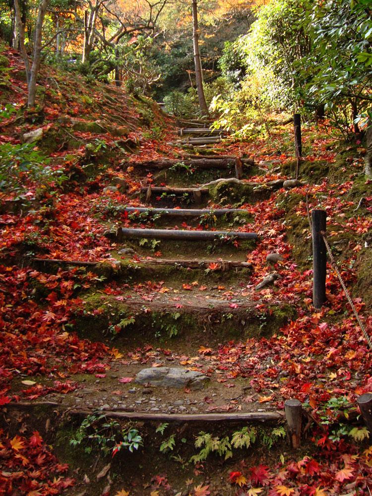 滝口寺の紅葉