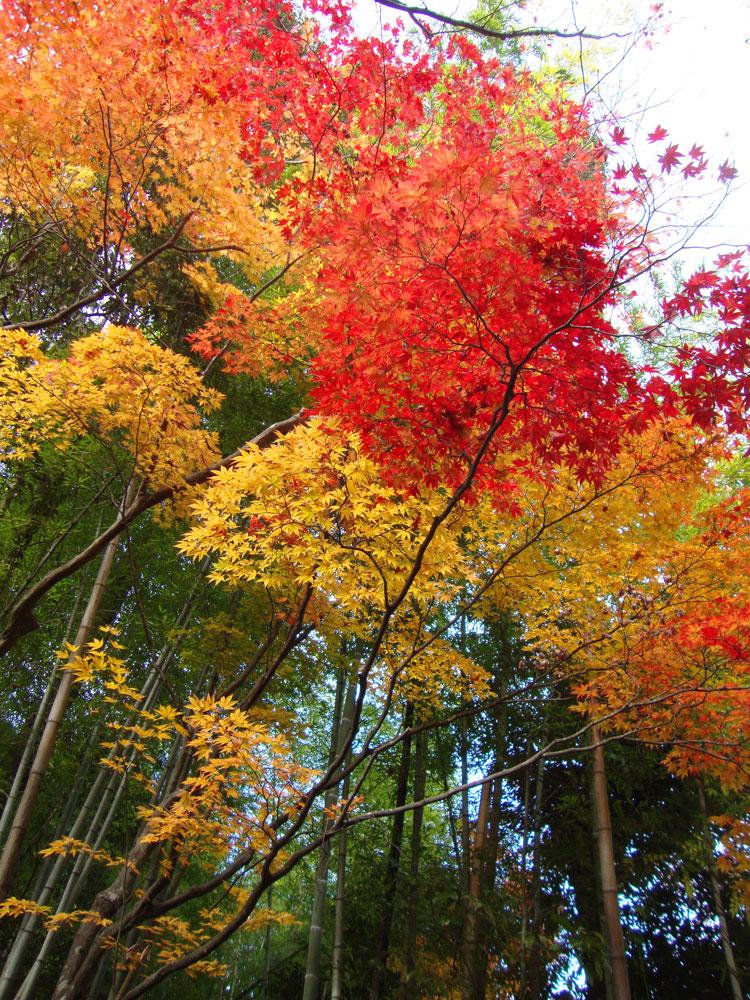 滝口寺の紅葉の写真素材