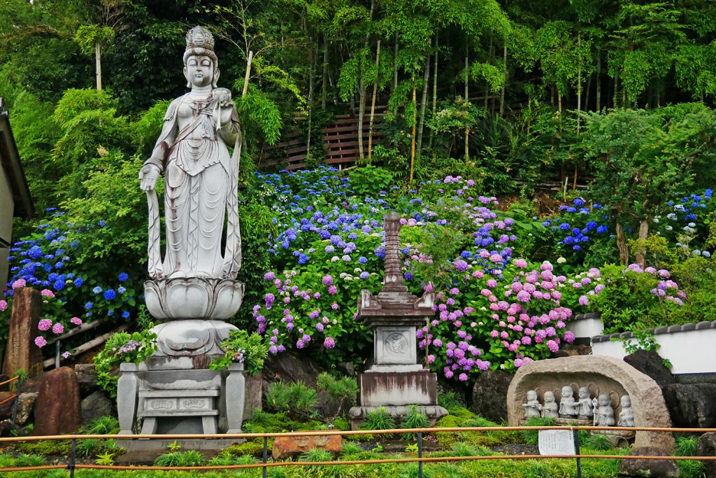 谷ヶ堂最福寺の紫陽花の写真素材