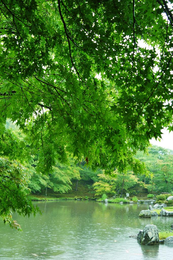 雨の天龍寺の写真素材