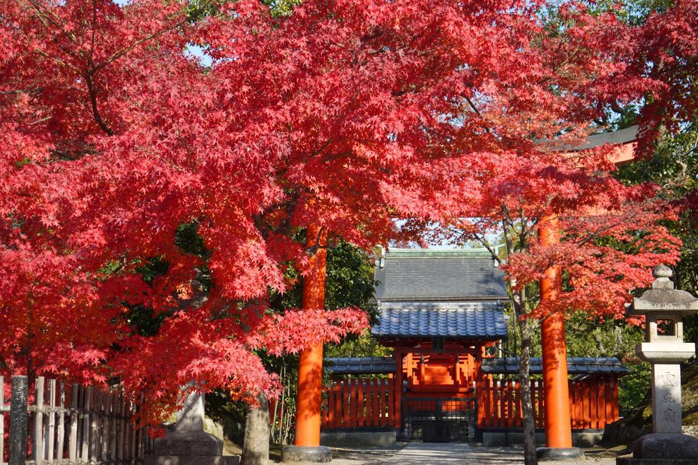 天龍寺の紅葉の写真素材