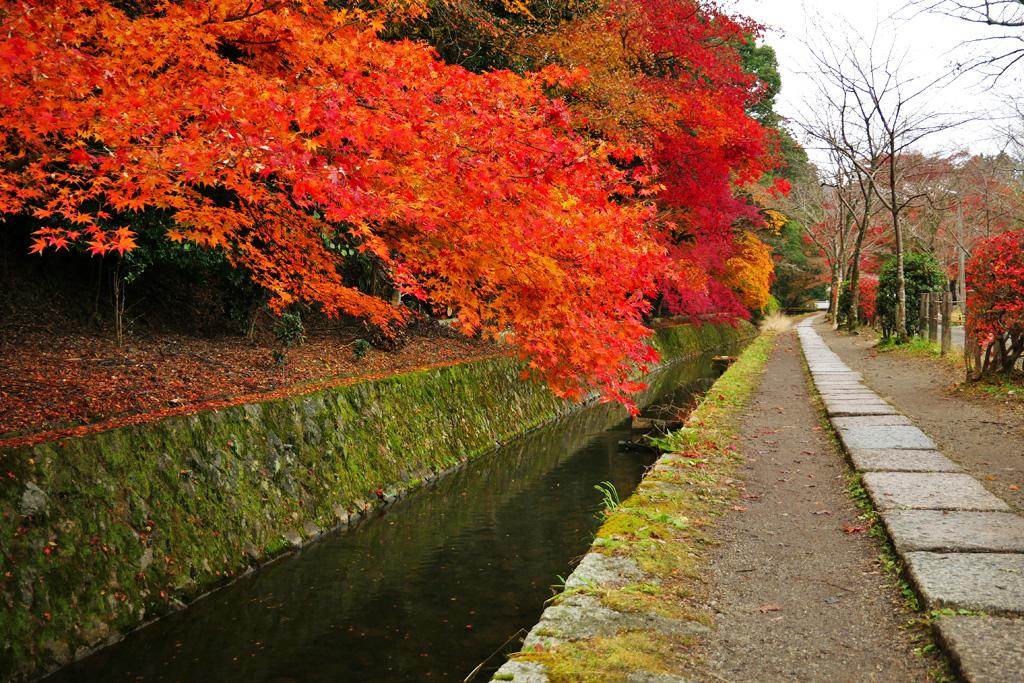 哲学の道の紅葉の写真素材