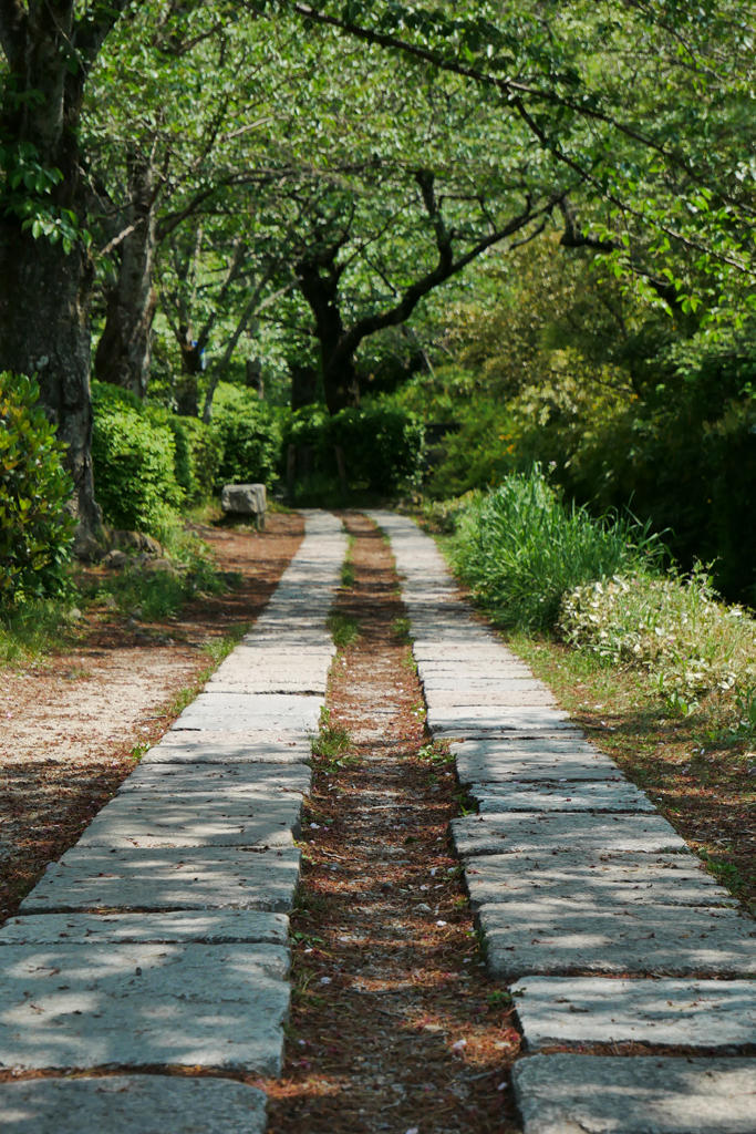 哲学の道の新緑の写真素材